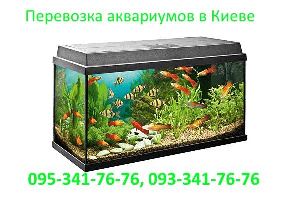 perevozka-akvarium-kiev